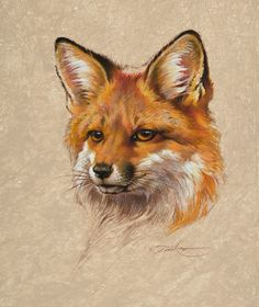 Red Fox Portrait Acrylic on Board Animal Sketches, Animal Drawings, Art Drawings, Fox Painting, Feather Painting, Fox Crafts, Fox Drawing, Raven Art, Fox Illustration