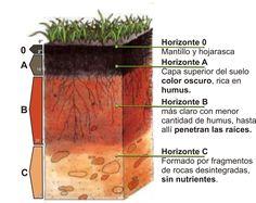 Teacher Pay Teachers, Plants, Carrera, Environment, Soil Classification, Law Enforcement, Growing Plants, Agriculture, Science