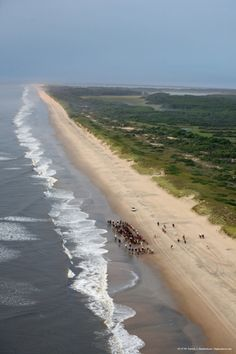 Aerial Photograph of the 2009 Chincoteague Pony Roundup