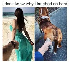 Memes is your source for the best & newest Memes, Funny Pictures, and hilarious videos. Find memes or make them with our Meme Generator. Funny Cute, The Funny, Hilarious, Daily Funny, Animal Memes, Funny Animals, Cute Animals, Lol, Laughing So Hard