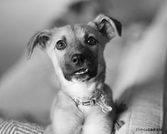 Here's what you need to know before you bring a new puppy home from a shelter.    Dog photography by Emma O'Brien award winning portrait photographer Shelter Puppies, Rescue Puppies, Dogs And Puppies, Black N White Images, Black And White, Dog Photography, Dog Portraits, New Puppy, Photoshoot Ideas