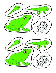 amphibian life cycle Frog Life Cycle, Log, and Lily Pads, Lesson Plans - The Mailbox Preschool Science Activities, Science For Kids, Sequencing Activities, Preschool Education, Elementary Science Experiments, Science Notes, Science Biology, Science Fair, Elementary Art