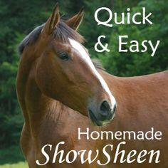 Quick & Easy Homemade Show Sheen for Horses. Saving some money this show season!