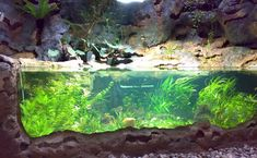 Example of glass front pond-aquarium (Mall of America)