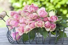 roses vintage decor