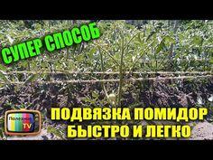 ПОДВЯЗКА ТОМАТОВ БЫСТРО И ЛЕГКО СУПЕР СПОСОБ ✔ | сад, огород | Постила