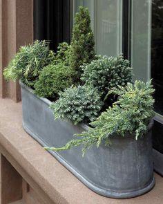 WINTER window box front. jardin-hiver-rebord-fenêtre-jardinière-métallique-buissons-verts