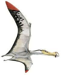 Ornithocheirus,um dos maiores pterossauros