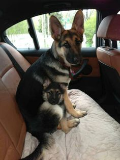 Now this is a safety seat.