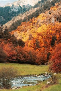 The smell of the cold Autumn breeze blowing through the thin pieces if your hair and the pumpkins everywhere. The signs that autumn is near. Beautiful World, Beautiful Images, Landscape Photography, Nature Photography, Autumn Aesthetic, Cozy Aesthetic, Photos Voyages, Belleza Natural, Autumn Trees