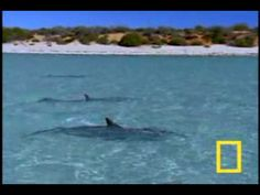 Sonido de agua - YouTube Yoga, Whale, Youtube, Animals, Outdoor, Diets, Exercises, Outdoors, Whales