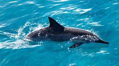 Fond d'écran hd : dauphin