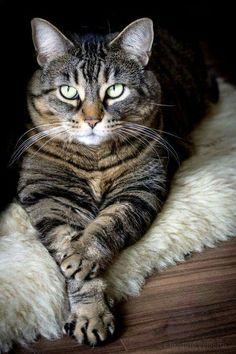 Looks just like my cat, Pumpkin!
