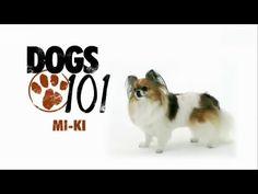 DOGS 101 - Mi-Ki [ENG]