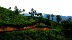 Experience #Munnar surrounded by hilly mountains and the constant drizzle with bookahotel.in... Ensure your stay at   http://www.bookahotel.in/dbah109/Munnar/5-star-Hotels.html