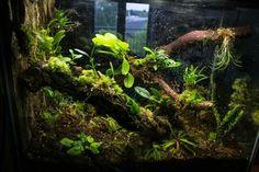 . Vivarium, Paludarium, Amphibians, Reptiles, Lizards, Reptile Cage, Reptile Enclosure, Gecko Terrarium, Moss Garden