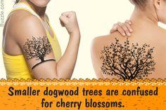 dogwood tree tattoo google search fashion monger pinterest rh pinterest ie dogwood tree flower tattoos pink dogwood tree tattoo