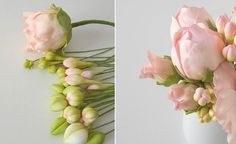 peony buds by PetalSweet