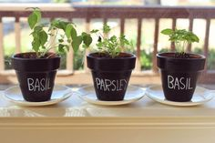 22+ Originales y Creativos Mini Jardines para Interior Herb Planters, Herb Pots, Plant Pots, Diy Chalkboard Paint, Chalk Paint, Diy Herb Garden, Dish Garden, Garden Cottage, Vegetable Garden