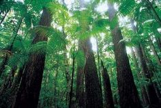 Read about The Rainforests of Fraser Island and view the Fraser Island Tours that will take you there Fraser Island, Island Tour, Group Tours, Cactus Plants, To Go, Adventure, Gallery, Roof Rack, Cacti