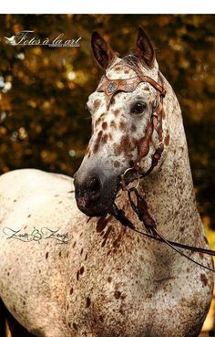 Stunning Appaloosa in a bridle Cute Horses, Horse Love, Horse Photos, Horse Pictures, Most Beautiful Animals, Beautiful Horses, Animals And Pets, Cute Animals, Majestic Horse