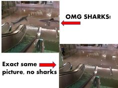 How to Tell if a Photo of a Shark Swimming in a Flooded City is Fake in Five Easy Steps