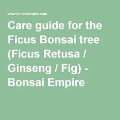 Care guide for the Ficus Bonsai tree (Ficus Retusa / Ginseng / Fig) - Bonsai Empire