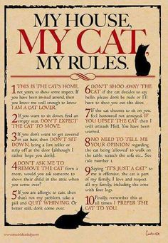 My House, My Cat, My Rules Digital print for cat lovers - crazy cat lady - Chat Cat Tiger, Doja Cat, Kitty Cats, Cats Bus, I Love Cats, Cute Cats, Funny Cats, Cats Funny Sayings, Cats Humor