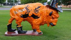 OSU buffalo Bartlesville, OK