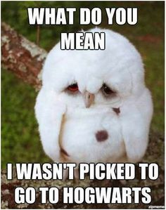 Sad owl is sad.