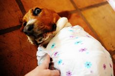 The first time I saw this photo of The Pioneer Woman's Basset Hound puppy Walter demonstrating how to swaddle an infant, I almost died laughing.