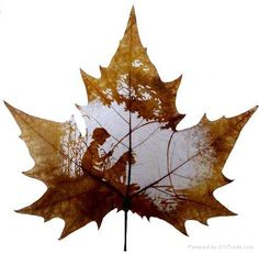 A beautiful example of leaf carving that is achieved without cutting or removing the veins of the leaf. Apparently some of the most suitable leaves for this art come from the Chinar Tree which is native to India, Pakistan, and China.