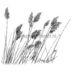Magenta Cling Stamps Wild Miscanthus