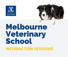 The Melbourne Veterinary School is coming to Canada! Interested in studying at one of the best vet schools in the world? Don't miss these info sessions! University Of British Columbia, University Of Melbourne, International University, University Degree, School Information, Top Universities, Veterinary Medicine, Secondary School, Studying
