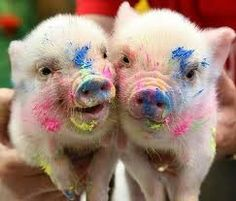 Painted pigs - so adorable