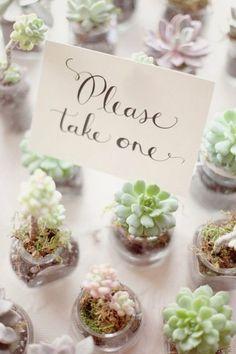 rustic wedding ideas-succulent wedding favor