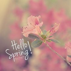 Hello Spring | Bonjour Printemps  #Spring #Printemps #Changement #Enfin #Goodbye #TeamBélier #20March #20mars #Belier #teambelier #like #likelike #follow #followforfollow #potd #picofday #picoftheday #otd #picture #flowers #saison #season #sud #montpellier #sète #lareunion #34 #974 by cecile.mln