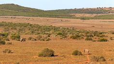 Addo Elephant Landscape Addo Elephant Landscape - Addo is a town in Sarah Baartman District Municipality in the Eastern Cape province of South Africa. Region east of the Sundays River, some 72 km northeast of Port Elizabeth.