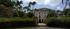 While it may sound religious, St. Nicholas Abbey is actually a sugar plantation and rum distillery, including a museum and rum tastings Rum Tasting, The Visitors, Barbados, Distillery, Museum, Sugar, Wine, Mansions, House Styles
