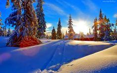 Ośnieżone, Drzewa, Dom, Wschód Słońca, Zima, Świerki