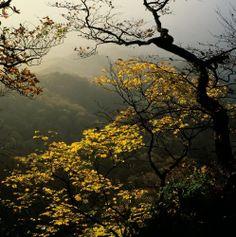 Autumn in the wood of La Verna (Tuscany) l  Vittorio Pigazzini