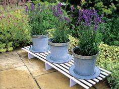 Lavender Plants Displayed in Matching Silver Pots --> http://www.hgtvgardens.com/photos/gardens-photos/pot-pourri-garden-pots-and-container-gardens?soc=pinterest
