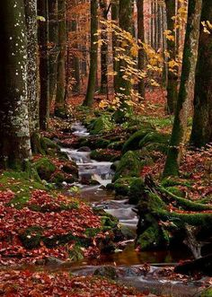 Autumn forest stream in Halland, Sweden