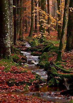 Autumn forest stream in Halland, Sweden