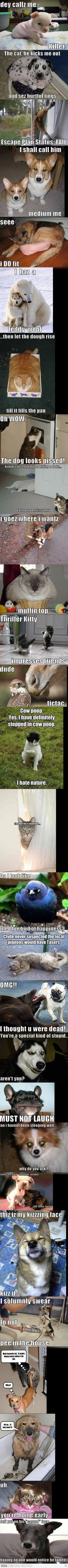 Funny animals! Luv the 9th one.