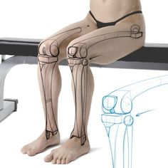 Leg bone demonstration. Get more examples at proko.com/anatomy!