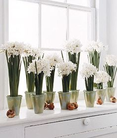 Pure Style Home: Forcing Paperwhites/ Narcissus Bulbs White Flowers, Beautiful Flowers, Glass Flowers, Fresh Flowers, Narcissus Bulbs, Narcisse, Winter Wedding Inspiration, Growing Flowers, White Christmas