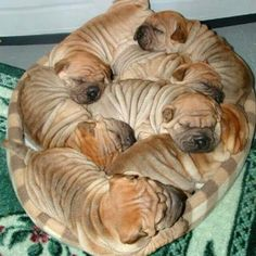 A little ball of wrinkled love ♡