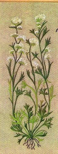 Grasses/graminées embroidery.