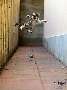 My cat jump by stefanoalleva